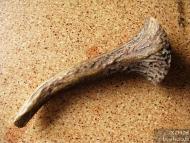 Шило-игла за кожа - Шип от еленов рог