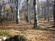 Хижа Чавдар, Буново - 26-27.11.2011 - снимка 5/19