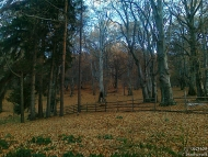 Хижа Чавдар, Буново - 26-27.11.2011 - снимка 6/19