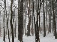 Среща на Кръстец - 22-23.01.2011 - Зимна гора