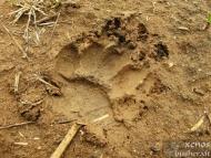 Среща на Мадарското плато - 16-17.04.2011 - Нещо от Порови