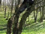 Среща на Мадарското плато - 16-17.04.2011 - Жу на дървото