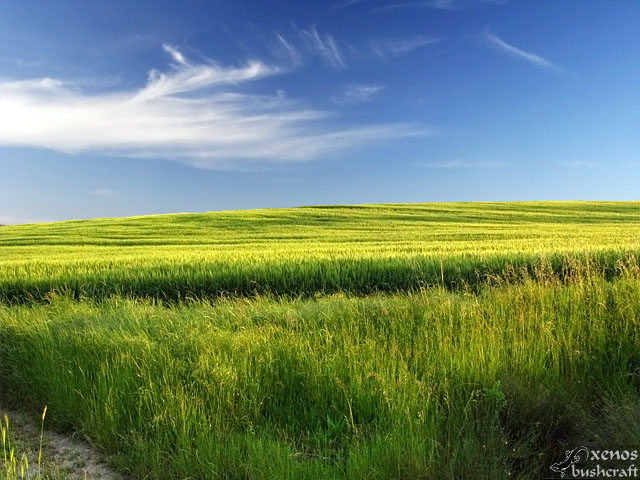 Зелените поля на Дивдядово