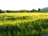 Зелените поля на Дивдядово - 27.05.2010