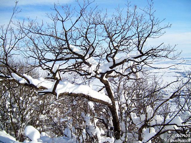Фотоотчет - 24.01.2010 ; 28/34