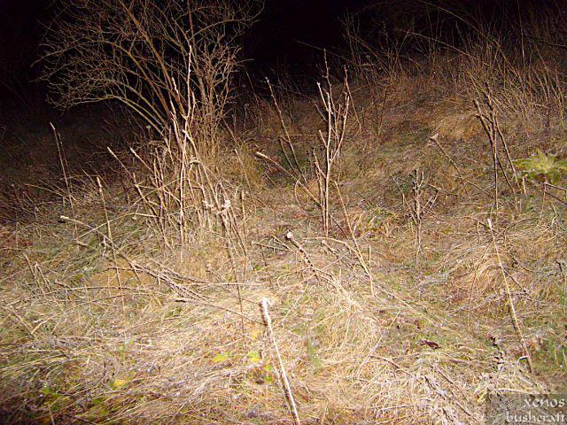 Тревите се покриват със скреж - Орлова чука, 29-30.12.2009