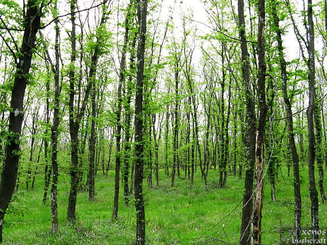 Свежа пролетна гора - Шуменското плато - 25.04.2010
