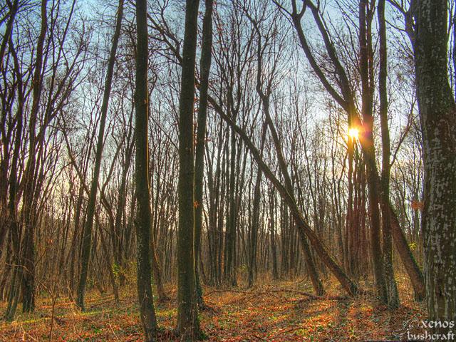 Вечер - Шуменско плато - 21.11.2010 - 1/18