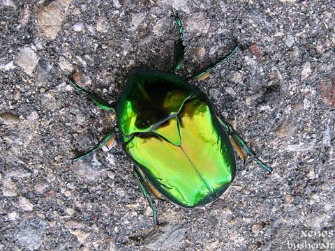 """""""гиганския зуатен бъъмбаъ"""" :) - Фотоотчет - 08.09.2010 - Шуменско плато 8/8"""