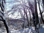 Фотоотчет - 24.01.2010 ; 13/34