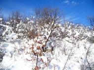 Фотоотчет - 24.01.2010 ; 29/34