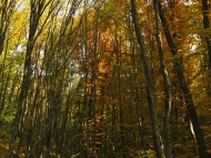 Шуменско плато - 01.11.2011 - В Калугер боаз
