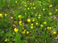 Пролетни горски цветя - Шуменското плато - 25.04.2010