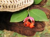 Фотоотчет - 29 август 2010 - Шуменско плато - Странни плодчета - 6/24