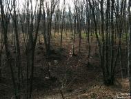 Шуменско плато - 21.11.2010 - 2/18