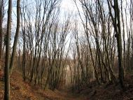 Шуменско плато - 21.11.2010 - 1/18