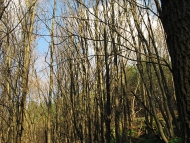 Дол - Шуменско плато - 21.11.2010 - 1/18
