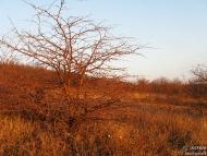 Глог - Шуменско плато - 21.11.2010 - 1/18