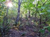Край на вилната зона. Започва гората.