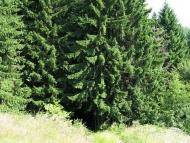 Към Ирокезката гора - Pow-Wow 2010, Витоша, 23-25.07