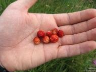 Горски ягоди - Pow-Wow 2010, Витоша, 23-25.07