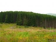 Ирокезката гора - Pow-Wow 2010, Витоша, 23-25.07