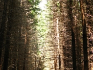 През Ирокезката гора - Pow-Wow 2010, Витоша, 23-25.07