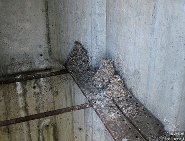 Асансьорната шахта в северното крило. Купчинките тор от гнездящите врани са достигнали колосални размери.