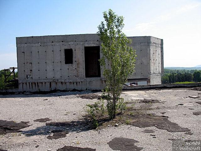 А това е може би най-голямата атракция в сградата. Три метрова топола, израстнала направо върху бетонната плоча на покрива. Отблизо видях, че корените й са минали и под арматурната решетка на бетона.