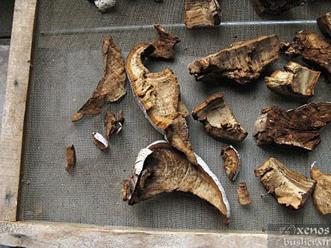 Същинска праханова гъба - Сушене на стромата