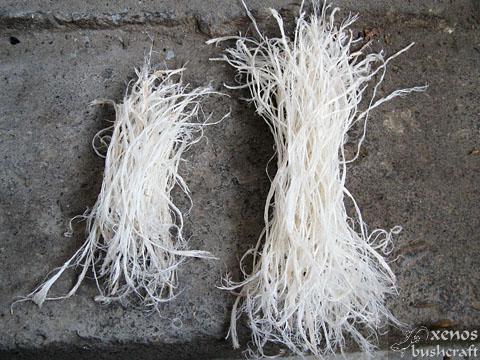 Сухожилие от крака на елен - Снопчета разделени влакна
