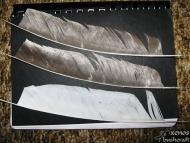 Стрели за Атлатъл - Подготвените пера