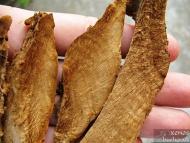Прахан от Същинска праханова гъба - Сухите парчета строма, преди да се накиснат