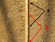Примитивна индианска стрела -  Възли (а) и междувъзлия (b)