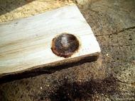 Bow Drill - След 10-15 секунди въртене се получава овъглена вдлъбнатина.