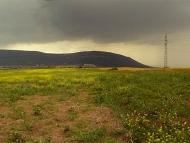 """Местността """"Голям Батнивец"""". Над Дивдядово и Шумен вали силен дъжд."""