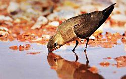 Пойните птици винаги са близо до вода