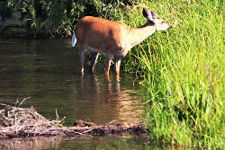Животните също имат любими места за водопой