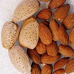 Бадем (Prunus amygdalus) - Ядки