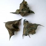 Джулюн, Воден орех (Trapa natans) - Плод