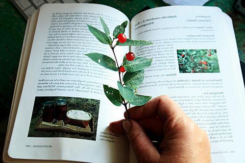 Изучаване на дивите растения с помоща на определител