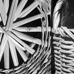 Arundo donax - Плетени кошници